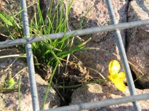 caged flower