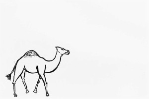 I have plans for this camel